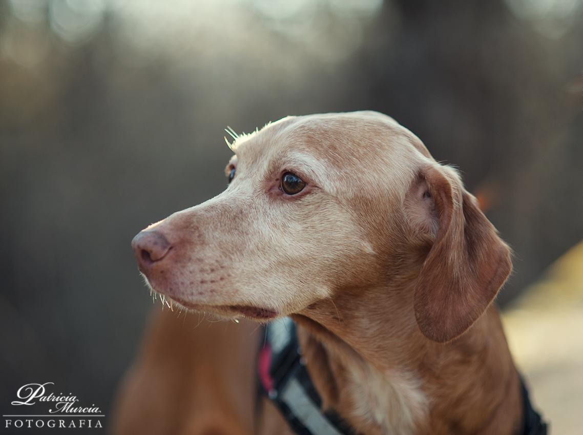 sesión perruna fotografía de mascotas-03