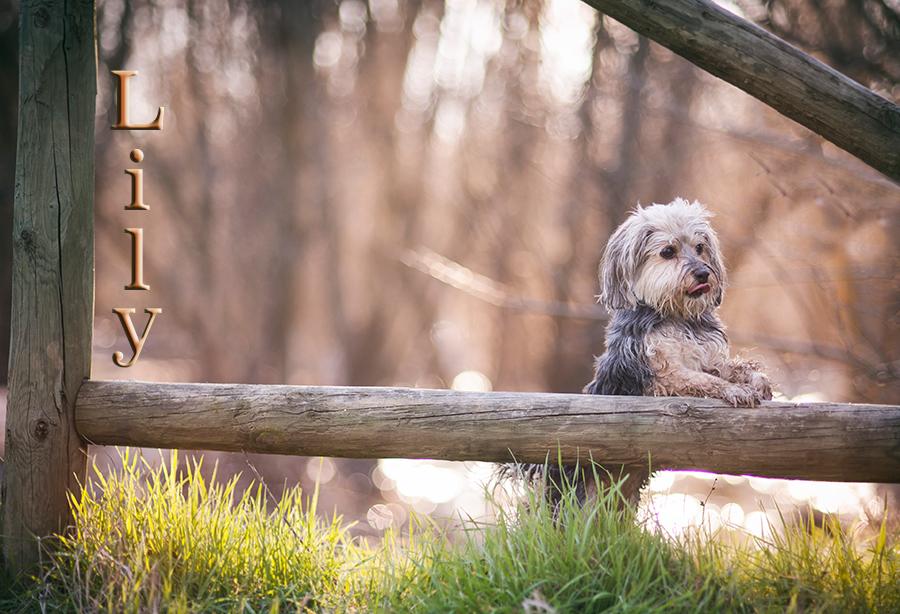 sesión perruna fotografía de mascotas-09