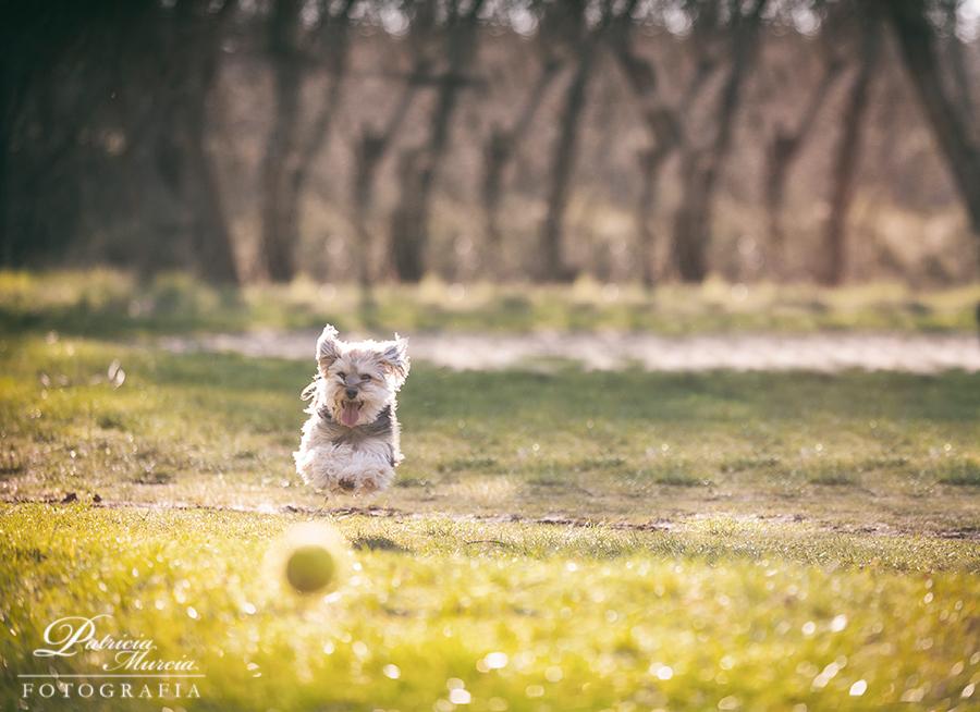 sesión perruna fotografía de mascotas-12